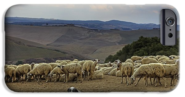 Cattle Dog iPhone Cases - Flock Of Sheep iPhone Case by Joana Kruse