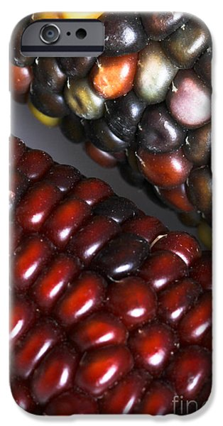 Sweet Corn iPhone Cases - Indian Corn iPhone Case by Photo Researchers, Inc.
