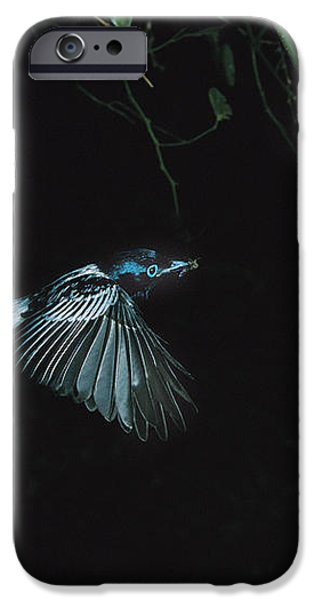 Madagascar Paradise Flycatcher iPhone Case by Cyril Ruoso