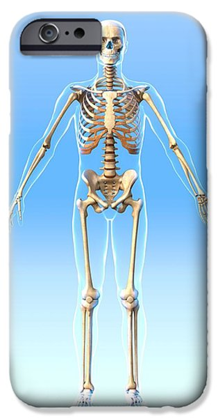 Male Skeleton, Artwork iPhone Case by Roger Harris