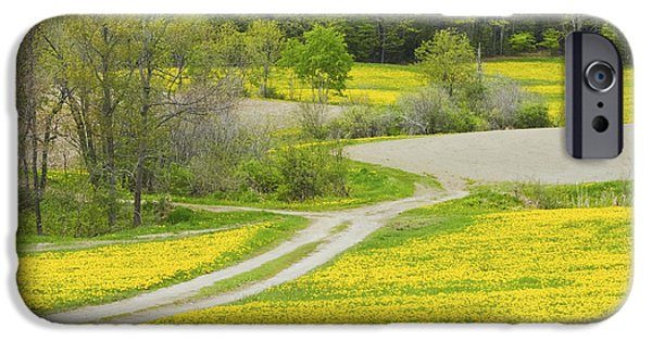 Rural Maine Roads iPhone Cases - Spring Farm Landscape With Dandelion bloom in Maine iPhone Case by Keith Webber Jr