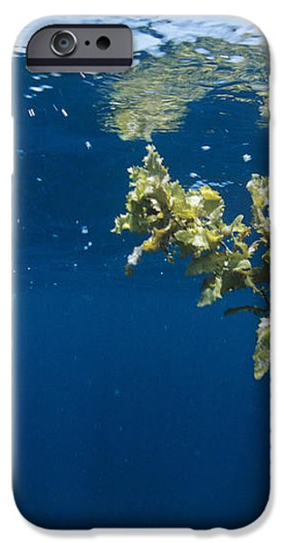 Tropical Seaweed iPhone Case by Alexis Rosenfeld
