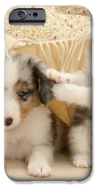 Kitten And Pup iPhone Case by Jane Burton
