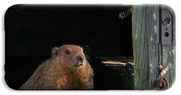 Groundhog Digital Art iPhone Cases - 5003-Groundhog iPhone Case by Martha Abell