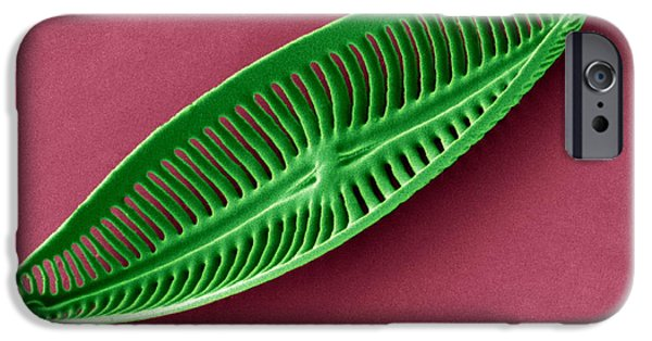Calcareous Phytoplankton Photographs iPhone Cases - Diatom, Sem iPhone Case by Steve Gschmeissner