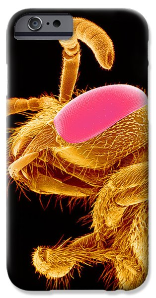 Bee Head, Sem iPhone Case by Susumu Nishinaga