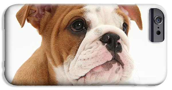 Dog Close-up iPhone Cases - Bulldog Pup iPhone Case by Mark Taylor