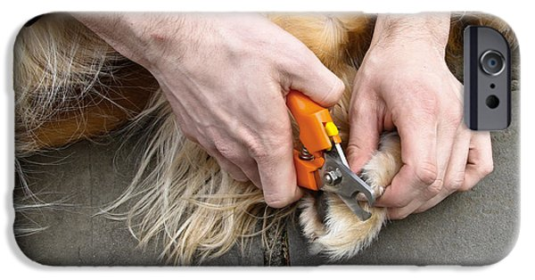 Pet Care iPhone Cases - Dog Grooming iPhone Case by Photo Researchers, Inc.