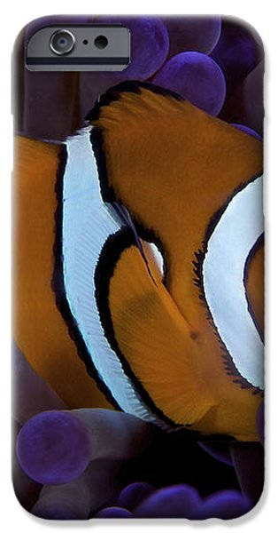 False Ocellaris Clownfish In Its Host iPhone Case by Terry Moore