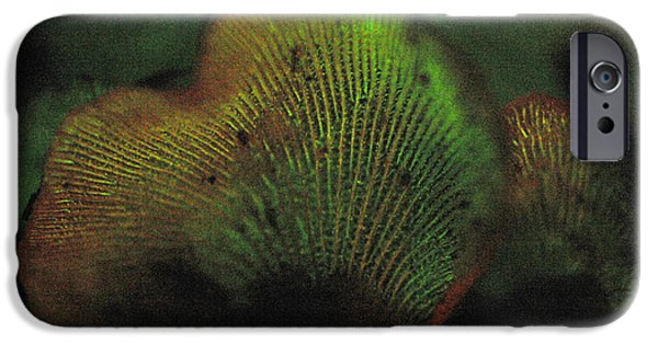 Luminescent iPhone Cases - Luminescent Mushroom Panellus Stipticus iPhone Case by Ted Kinsman