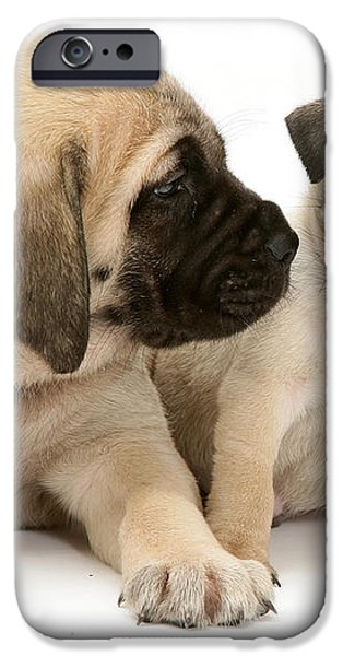 Pug And English Mastiff Puppies iPhone Case by Jane Burton