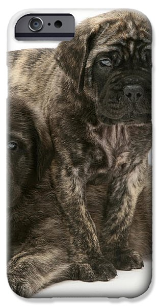 Puppies iPhone Case by Jane Burton