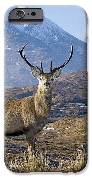 Red Deer Stag iPhone Case by Duncan Shaw