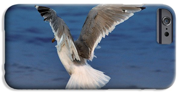 Seagull iPhone Cases - Seagull  iPhone Case by Debra  Miller