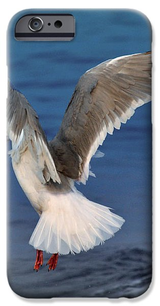 Seagull  iPhone Case by Debra  Miller