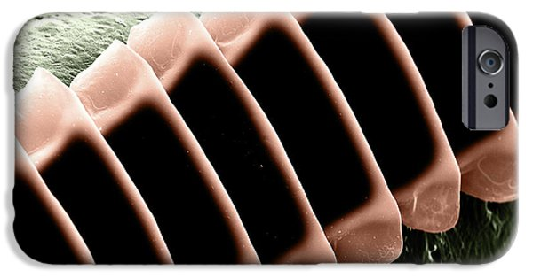 Cricket iPhone Cases - Cricket Sound Comb, Sem iPhone Case by Ted Kinsman