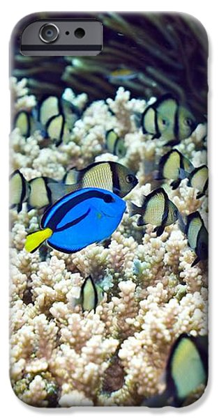 Tropical Reef Fish iPhone Case by Georgette Douwma