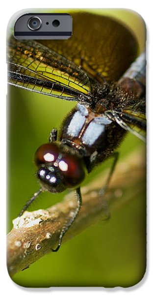 macro iPhone Case by Jack Zulli
