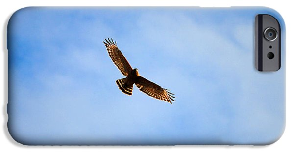 Red Shouldered Hawk In Flight iPhone Case by Jai Johnson