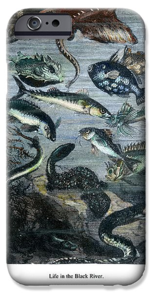 VERNE: 20,000 LEAGUES iPhone Case by Granger