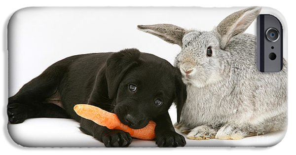 Puppies iPhone Cases - Rabbit And Puppy iPhone Case by Jane Burton
