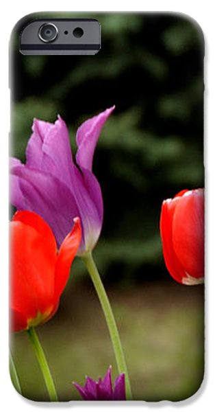 Tulip Garden University of Pittsburgh  iPhone Case by Thomas R Fletcher