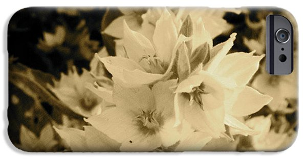 Sepia Flowers iPhone Cases - A bloom of sepia iPhone Case by Trish Hale