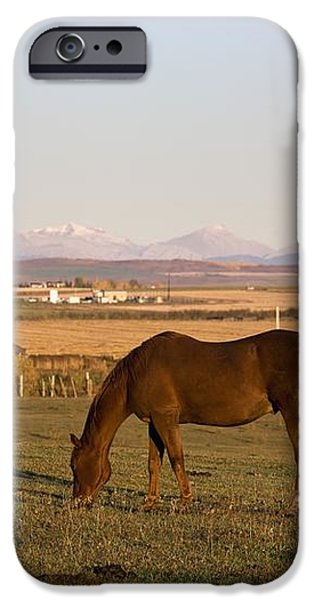 A Brown Horse Grazing In A Field In iPhone Case by Michael Interisano