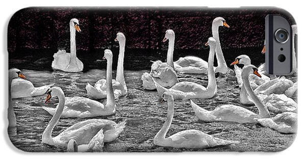 Swans... iPhone Cases - A Cacophony of Swans iPhone Case by Chris Lord