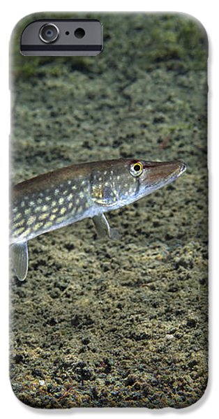 A Chain Pickerel Wimming The River iPhone Case by Terry Moore