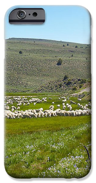 A Flock of Sheep 2 iPhone Case by Philip Tolok