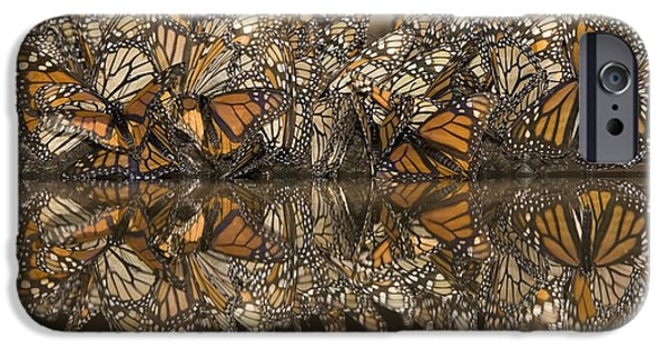 Recently Sold -  - Fauna iPhone Cases - A Flutter of Monarchs Drinking  iPhone Case by Ingo Arndt