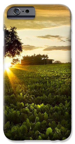A Golden Evening  iPhone Case by Debra and Dave Vanderlaan