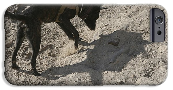 Iraq iPhone Cases - A Military Working Dog Searches An Area iPhone Case by Stocktrek Images