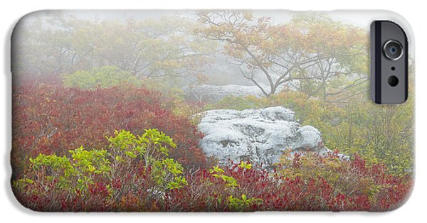 Sod iPhone Cases - A Natural Garden at Dolly Sods Wilderness Area iPhone Case by Bill Swindaman