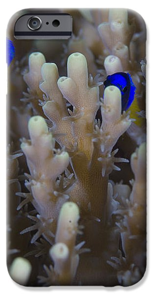 A Pair Of Yellowtail Damselfish Amongst iPhone Case by Steve Jones