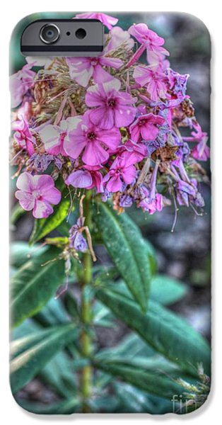 Phlox iPhone Cases - A Phlox on all your houses iPhone Case by David Bearden
