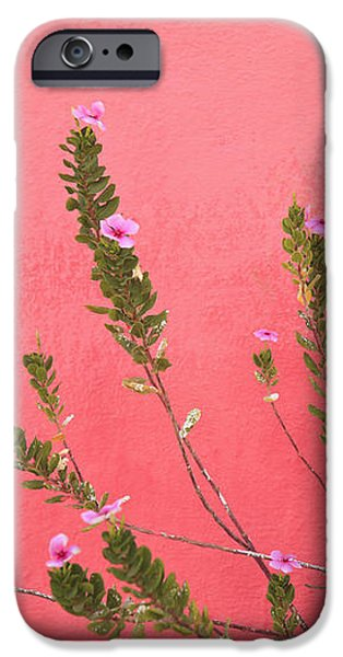 A Pink Flowering Plant Growing Beside A iPhone Case by Stuart Westmorland