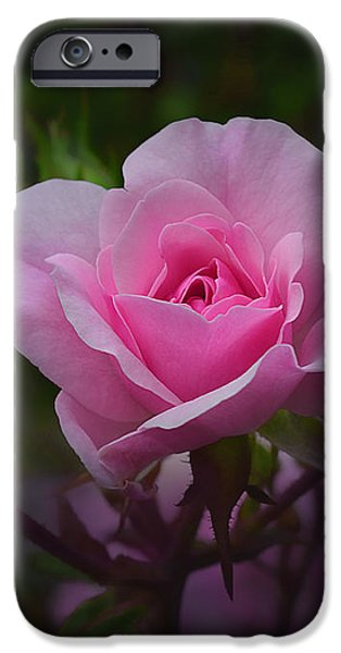 A Pink Rose iPhone Case by Xueling Zou