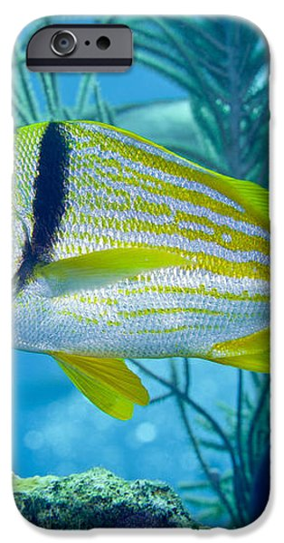 A Porkfish Swims By Sea Plumes iPhone Case by Terry Moore