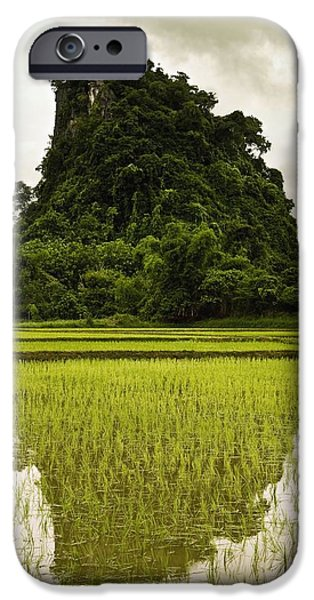 Reflection Harvest iPhone Cases - A Rice Field In Asia iPhone Case by Nathan Lau