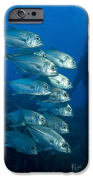 A School Of Bigeye Trevally, Papua New iPhone Case by Steve Jones