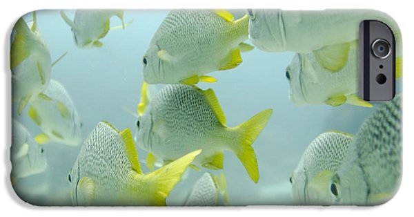Grunts iPhone Cases - A School Of Yellow-tailed Grunt Fish iPhone Case by Keith Levit