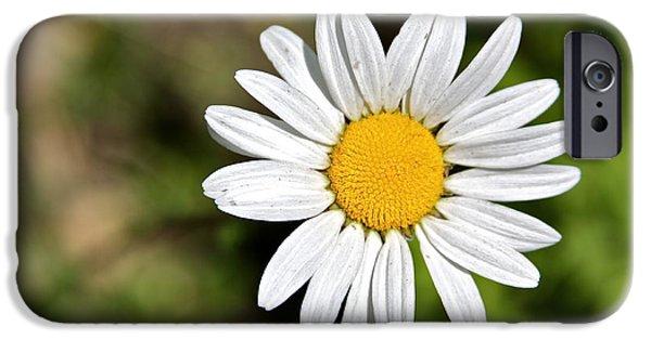 Innocence iPhone Cases - A Single Daisy iPhone Case by Karon Melillo DeVega