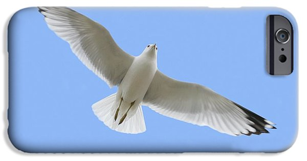 Flying Seagull Photographs iPhone Cases - A Soaring Dove iPhone Case by Don Hammond