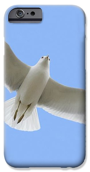 A Soaring Dove iPhone Case by Don Hammond