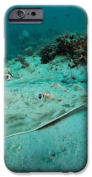 A Southern Stingray On The Sandy Bottom iPhone Case by Michael Wood