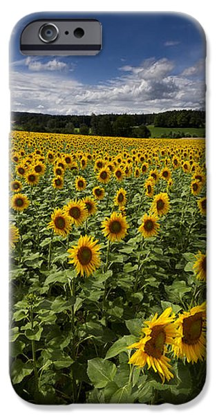 A Sunny Sunflower Day iPhone Case by Debra and Dave Vanderlaan