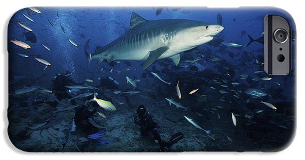 The Tiger iPhone Cases - A Tiger Shark Swims Over A Group iPhone Case by Terry Moore