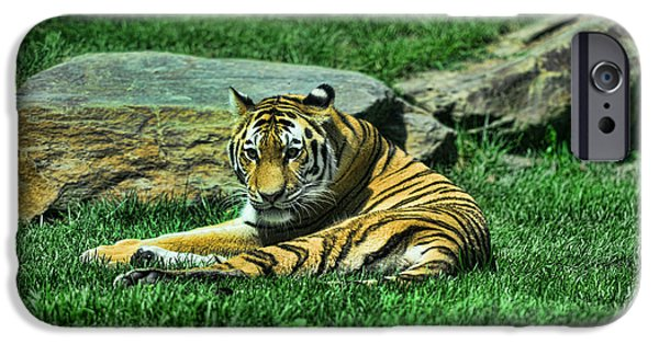 The Tiger iPhone Cases - A Tigers Gaze iPhone Case by Paul Ward